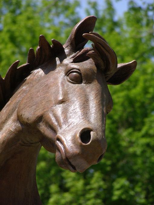 wild horse face